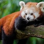 10 Hewan Paling Soliter di Dunia, Mandiri dan Tak Takut Hidup Sendiri